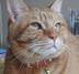 猫のニコさんの画像
