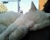 りん猫さんの画像