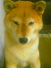 kazunさんの画像