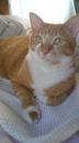Gingerさんの画像
