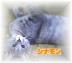 シナモンさんの画像