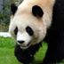 mikanpandaさんの画像