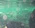 久魚さんの画像