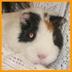 atsumiさんの画像