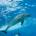 Super_dolphin