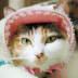 猫ビギさんの画像