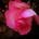 engrid