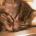 kentarrow