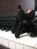 黒猫ハナさんの画像