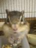 あきポンさんの画像