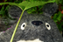 katakiyoさんの画像