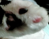 mu_4811さんの画像