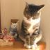kisaragikeiさんの画像