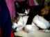 女系猫猫犬家族さんの画像
