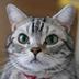 ヒロオトさんの画像