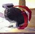 赤芋虫さんの画像