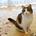minsuke