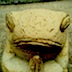 tosa_muuの画像