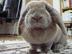 chokoさんの画像