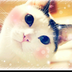 ohbayashiさんの画像
