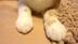 01_chanさんの画像