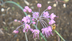 春野のきりちゃんさんの画像