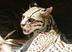 sleepcatさんの画像