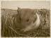 ikedaさんの画像