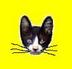 猫ぴょんさんの画像