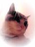 うっかり猫トメ吉さんの画像