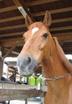 明石乗馬協会さんの画像