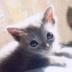catnapさんの画像