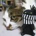 miacatさんの画像