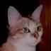 Nyandamさんの画像