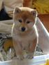 momijiさんの画像